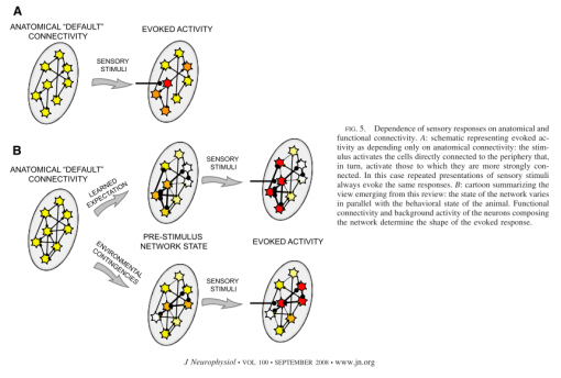 Variability of states depends on the functional network structure. Image from Fontatnini and Katz (2008)